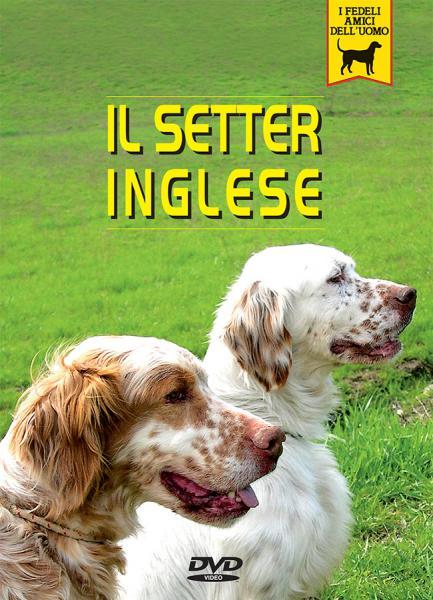 Setter inglese documentario video dvd passione animali for Cane setter