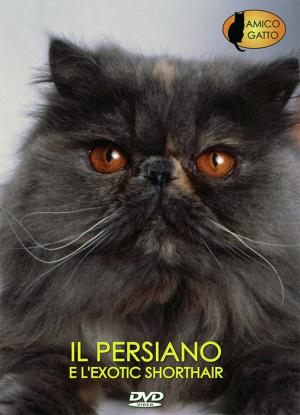 PERSIANO e L'EXOTIC SHORTHAIR