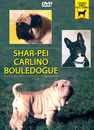 SHAR-PEI, CARLINO e BOULEDOGUE